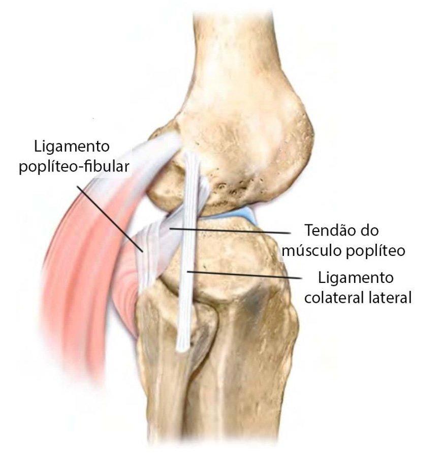 Lesões de Ligamento no Joelho   Dr. Pedro Giglio
